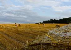 何力生:功能农业任重道远