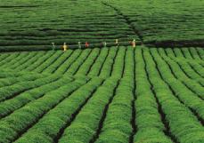 何力生:敬你一杯贵州好茶