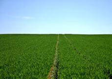 何力生:功能农业是未来人类健康重要驱动