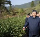 主席的目光又一次投向茶产业发展