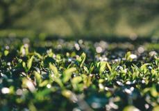 何力生:价值好水,是对春茶最大的尊重。